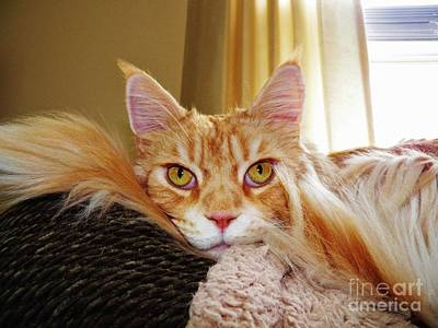 Photograph - Bright Eyed And Bushy Tailed by Judy Via-Wolff