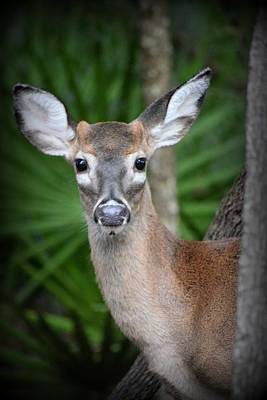 Photograph - Bright Eyed Button Buck by Sheri McLeroy