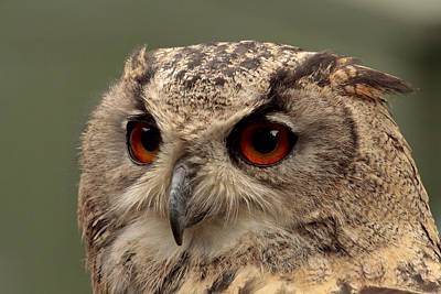 Bright Eyed Eagle Owl  Art Print by Simon Gregory