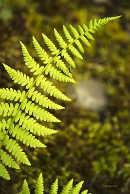 Photograph - Bright Green Fern Leaf by Christina Rollo