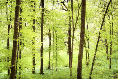 Photograph - Bright Green Forest In Spring With Beautiful Soft Light  by Matthias Hauser