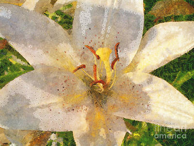 Photograph - Bright Lily by Claire Bull