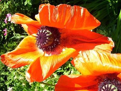 Art Print featuring the photograph Bright Orange Poppy by Kristine Bogdanovich