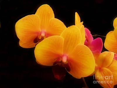 Photograph - Bright Orchids by Scott B Bennett