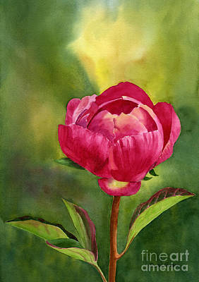 Bright Red Peony Blossom Original by Sharon Freeman