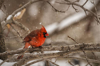Photograph - Bright Red by Scott Bean