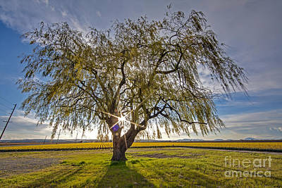 Skagit Photograph - Bright Spring Tree by Mike Reid