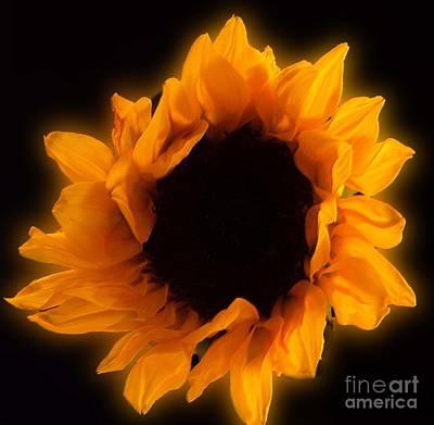 Photograph - Bright Sunflower by Sandra Clark