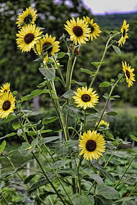 Bright Sunflowers Art Print