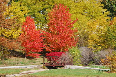 Photograph - Bright Trees by Mark McReynolds