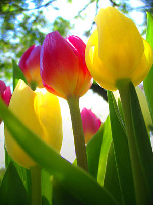 Photograph - Bright Tulips by Amber Nissen