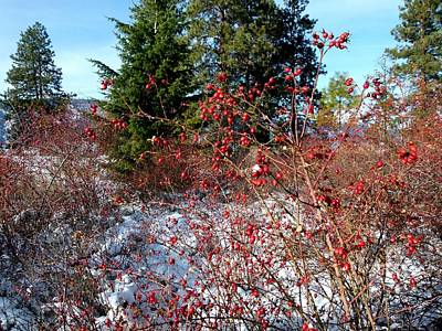 Photograph - Bright Winter Rosehips by Will Borden