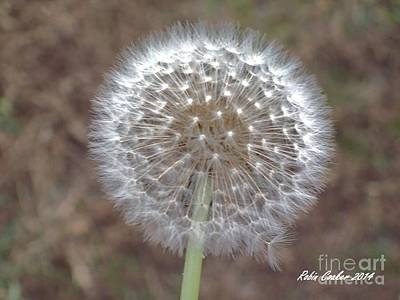 Photograph - Bright Wishes by Robin Coaker