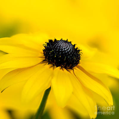 Photograph - Bright Yellow Day by Michael Arend