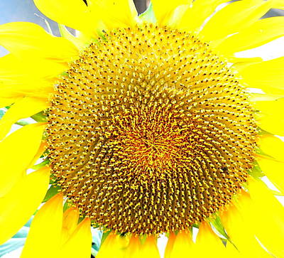 Photograph - Bright Yellow Sunflower Close by Jeff Lowe