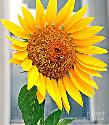 Featured Tapestry Designs - Bright Yellow Sunflower by Lilliana Mendez