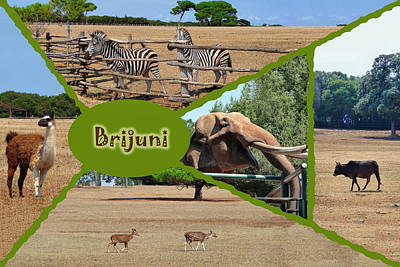 Photograph - Brijuni National Park Safari Collage by Brch Photography