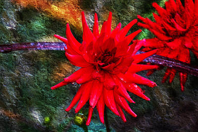 Photograph - Brilliance In An Autumn Garden - Red Dahlia by Marie Jamieson