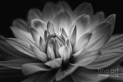 Photograph - Brilliance by Mary Lou Chmura