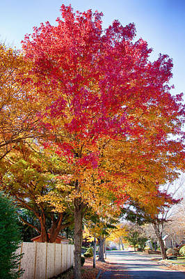 Photograph - brilliant autumn colors on a Marblehead street by Jeff Folger