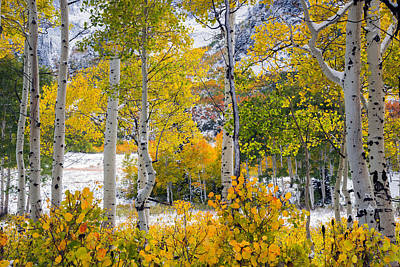 Photograph - Brilliant Autumn by Leland D Howard