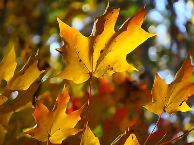 Fall Foliage Mixed Media - Brilliant Autumn Light And Color by Dan Sproul