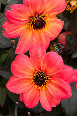 Photograph - Brilliant Blooms by Paul Mangold