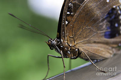 Photograph - Brilliant Butterfly II by Ray Warren