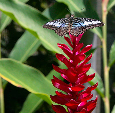 Photograph - Brilliant Butterfly by Natalie Rotman Cote