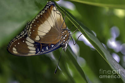Photograph - Brilliant Butterfly by Ray Warren