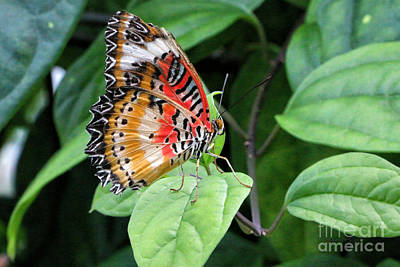 Photograph - Brilliant Butterfly by Shari Nees