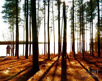 Photograph - Noon Time Sunshine  by Dawn Gari