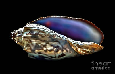 Photograph - Brindle Sea Shell by Walt Foegelle