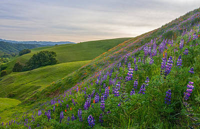 Martinez Photograph - Briones Wildflowers by Marc Crumpler