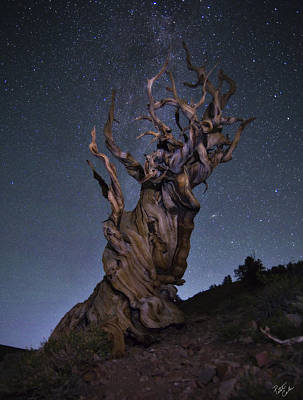 Peter James Nature Photograph - Bristlecone Ballet by Peter Coskun