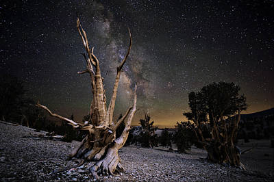 Astro Photograph - Bristlecone Pine And The Milky Way by Keith Marsh