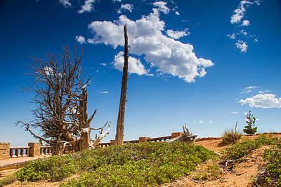 Photograph - Bristlecone Pine  by Kunal Mehra