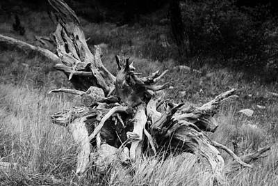 Photograph - Bristlecone Pine Stump by Harold Rau