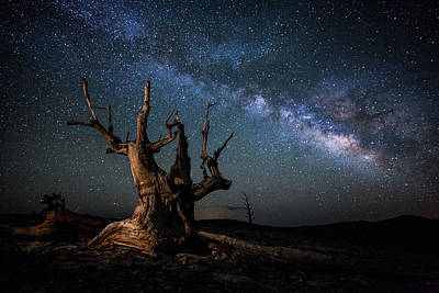 Photograph - Bristlecone Pine Tree And The Milky Way by Daniel J Barr