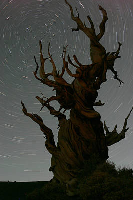 Photograph - Bristlecone With Star Trails by Karen Lindquist