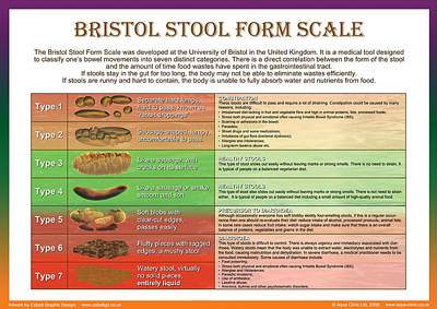 Stool Digital Art - Bristol Stool Form Scale by Galina Imrie