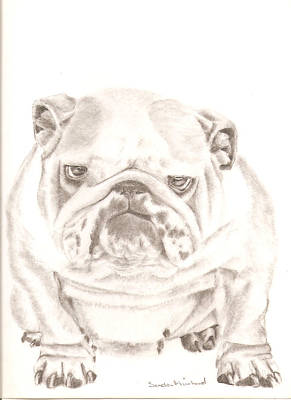 Drawing - British Bulldog Winnie by Sandra Muirhead