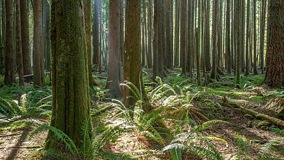 Photograph - British Columbia Forest by Pierre Leclerc Photography