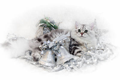 Fur Digital Art - British Longhair Cat Christmas Time by Melanie Viola