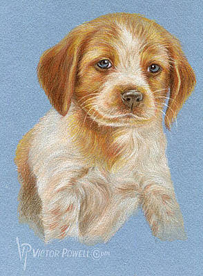 Drawing - Brittany Puppy Portrait by Victor Powell