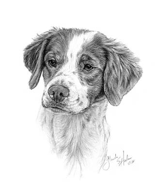 Brittany Spaniel Drawing - Brittany Spaniel Head Study by Glenda Harlan