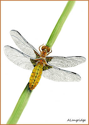 Demoiselles Painting - Broad-bodied Chaser Yellow Dragonfly by Alison Langridge