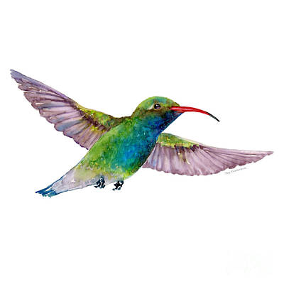 Animals Paintings - Broad Billed Hummingbird by Amy Kirkpatrick