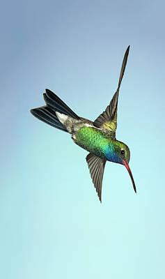 Iridescent Photograph - Broadbilled Hummingbird - Phone Case Design by Gregory Scott