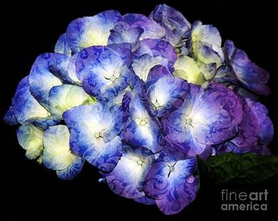 Photograph - Brocade Hydrangea by Rose Santuci-Sofranko